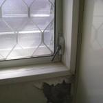 姫路市M様 浴室窓交換完了しました。