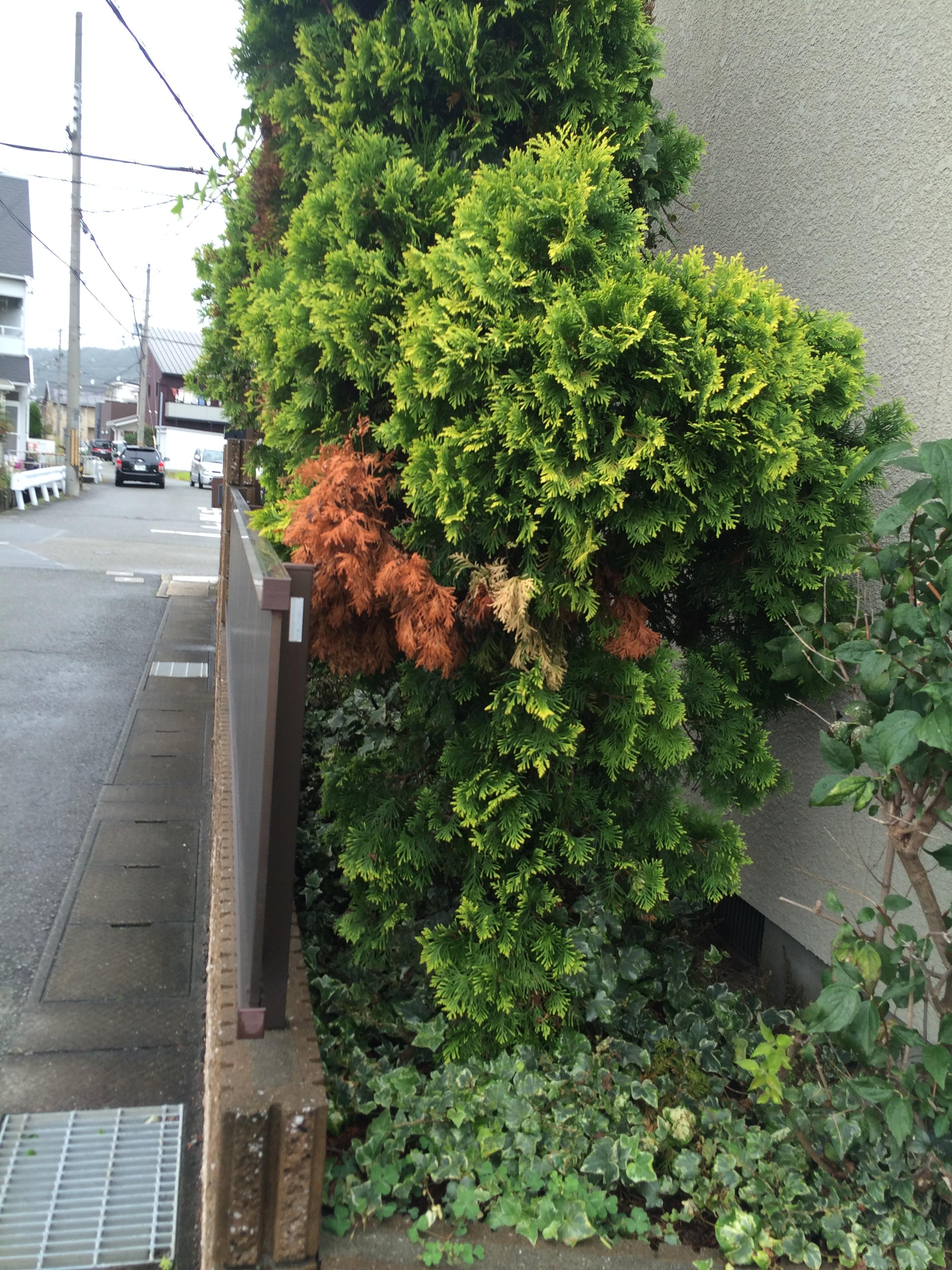 お手入れがしやすくなった植栽スペース