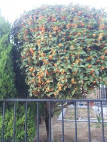 季節の木☆